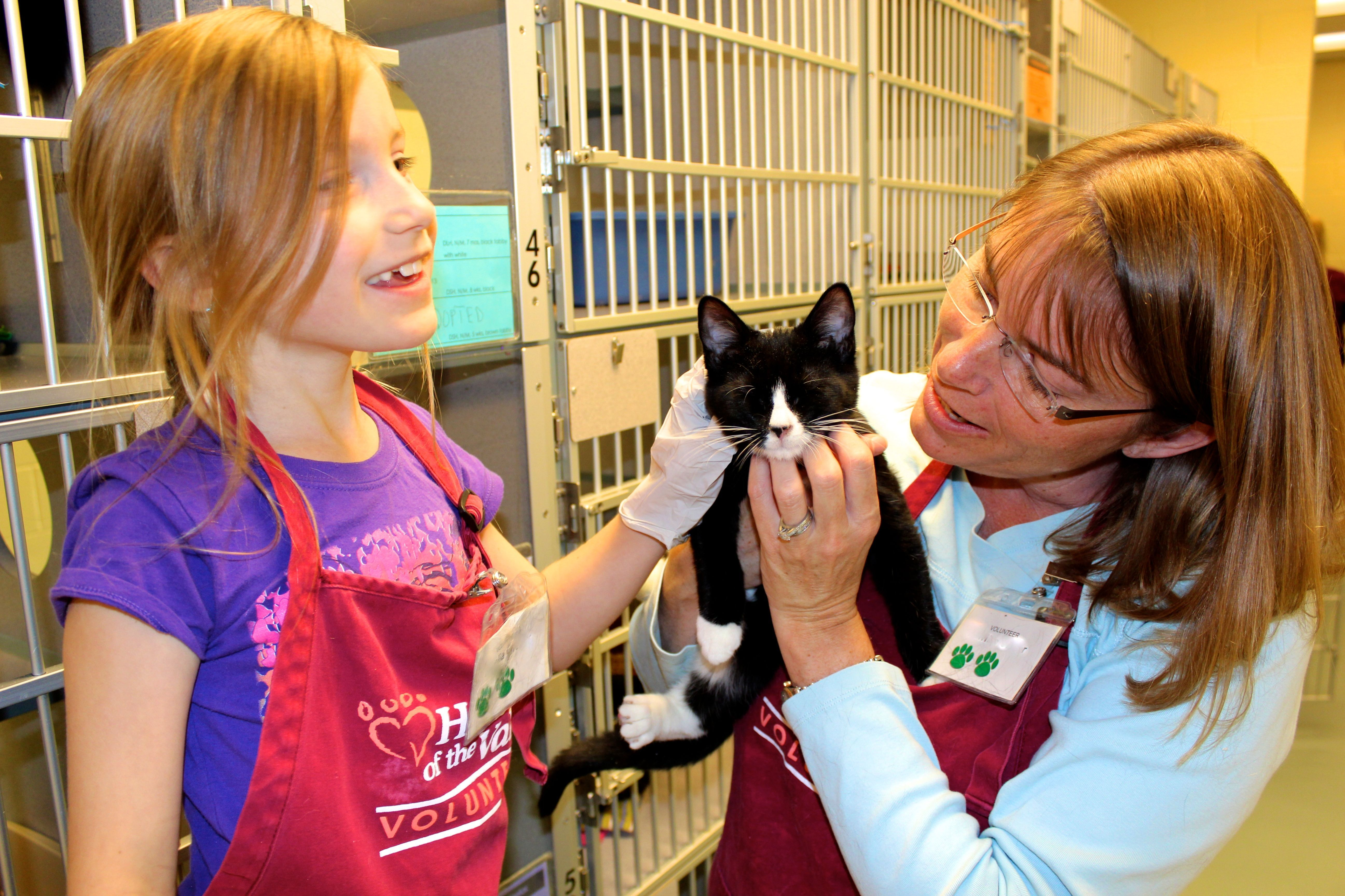 essay on volunteering at animal shelter Shelter volunteers thank you for your interest in volunteering at humane animal rescue our volunteers are the key to the success of our shelters.