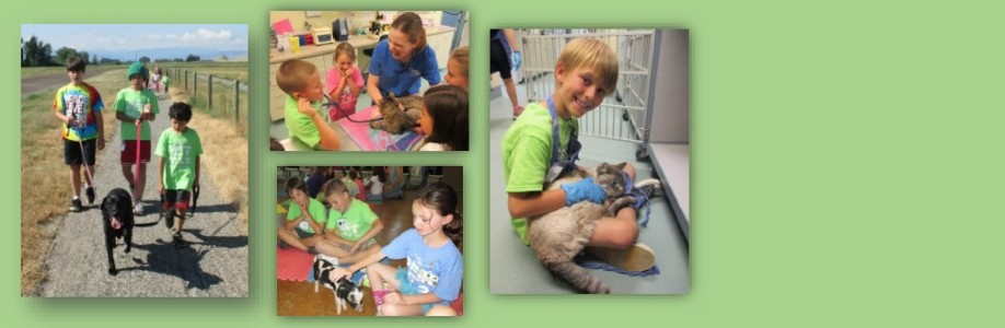 Pet Pals Summer Camp!