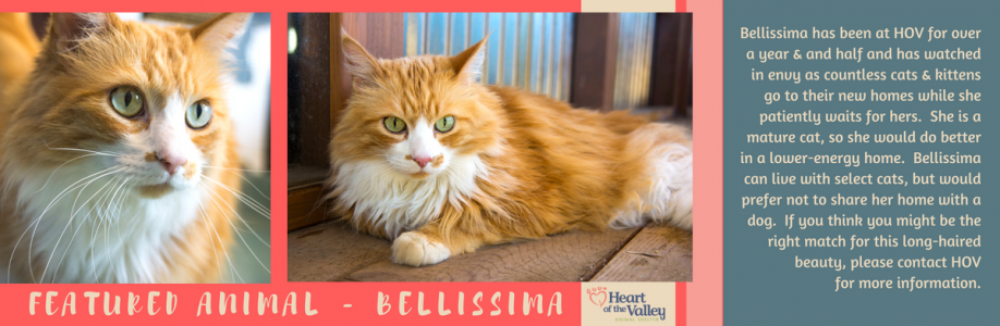 Featured Animal – Bellissima