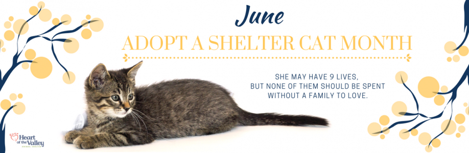 June – Adopt a Shelter Cat Month