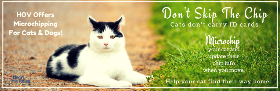 Microchip Your Cat