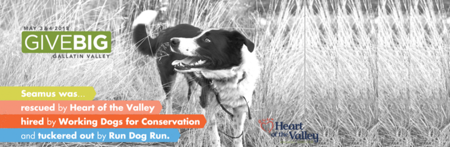Join the 'Dog Pack' for Give Big!