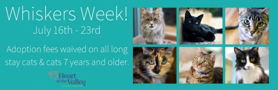 Whiskers Week