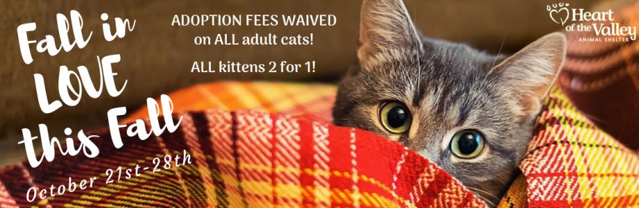 Adoption Promotion