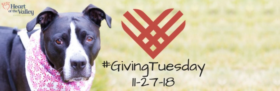 Help save dogs like Cony this #GivingTuesday!